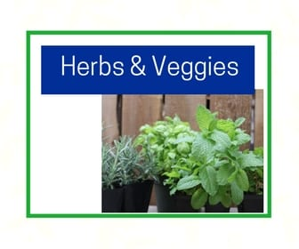 Herbs & vegetables at City Floral Greenhouse and Garden Center