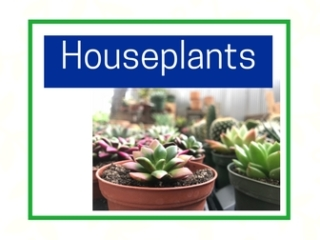 Houseplants at City Floral Greenhouse and Garden Center