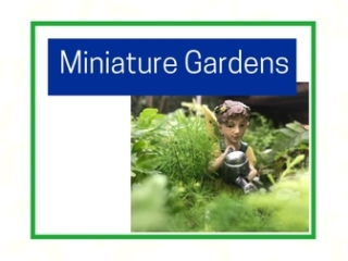 Miniature and fairy gardens at City Floral Greenhouse and Garden Center