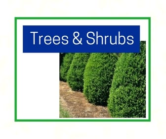 Trees And Shrubs At City Floral Greenhouse And Garden Center