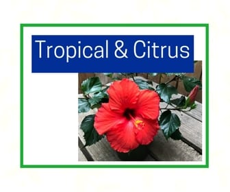 Tropicals and citrus at City Floral Greenhouse and Garden Center