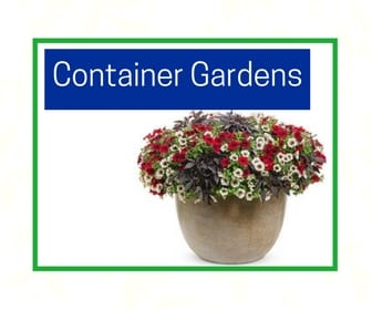 Container gardens at City floral greenhouse and garden center