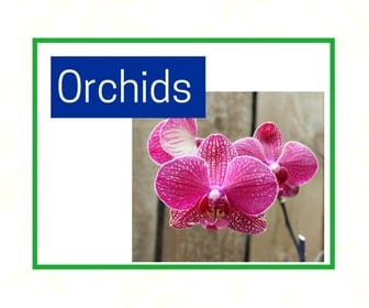 Orchids at City Floral Greenhouse and Garden Center