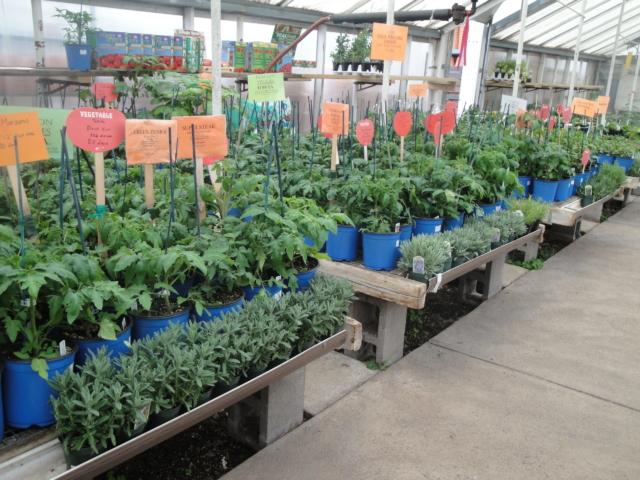 vegetables at city floral greenhouse and garden center