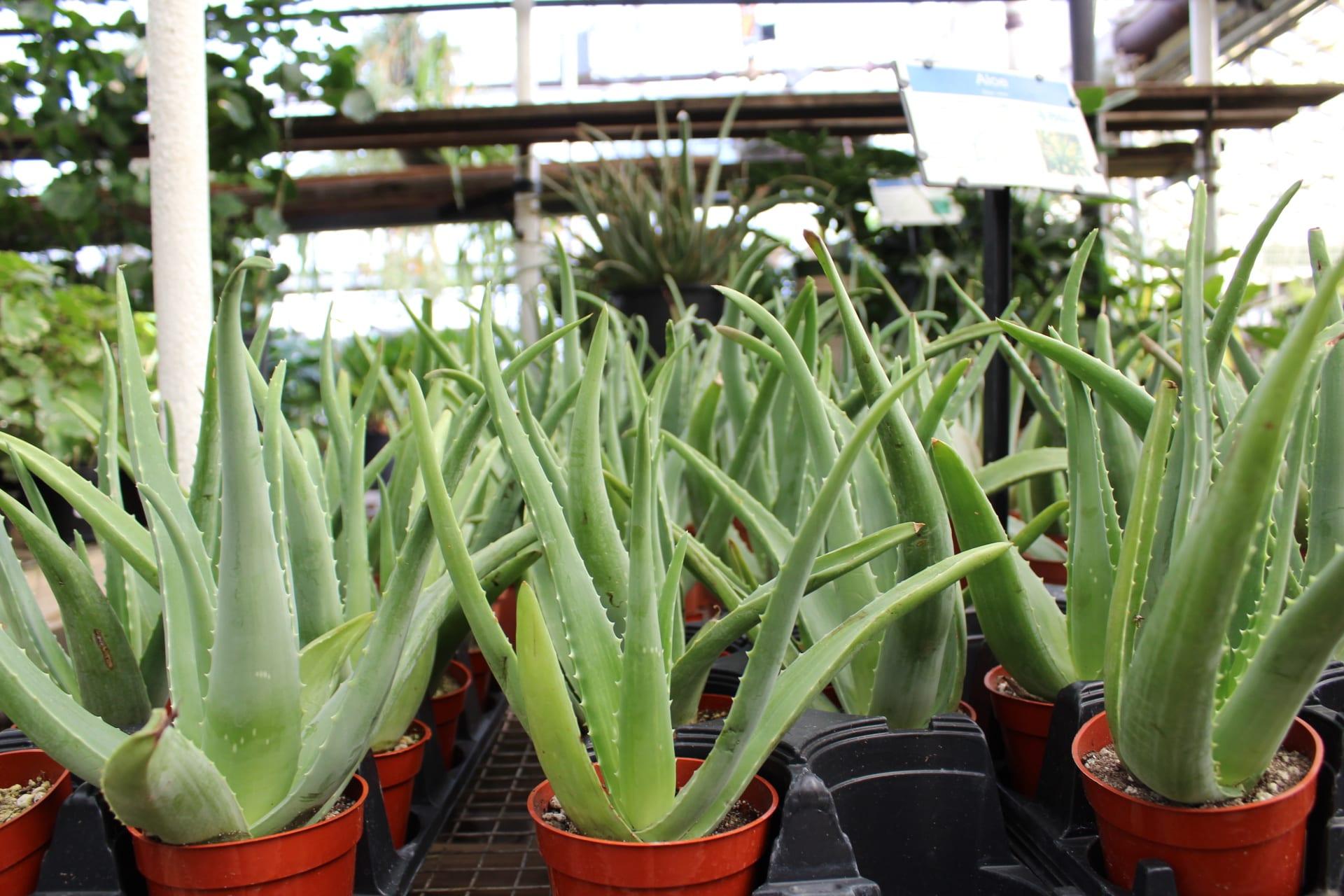 Denver Houseplants Indoor Plants