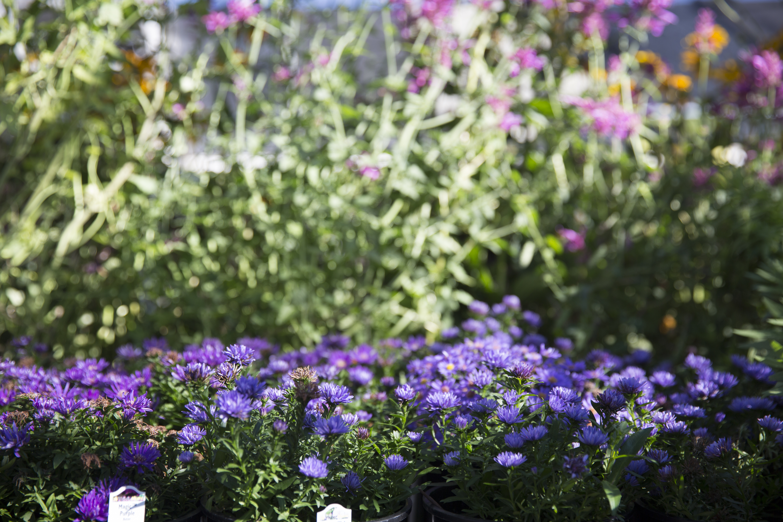 Perennial Flowers Plants Denver
