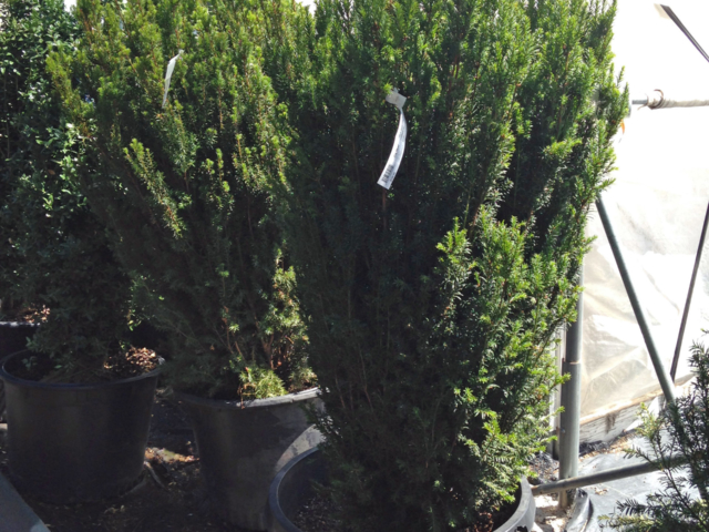 trees and scrubs at City Floral Greenhouse and Garden Center