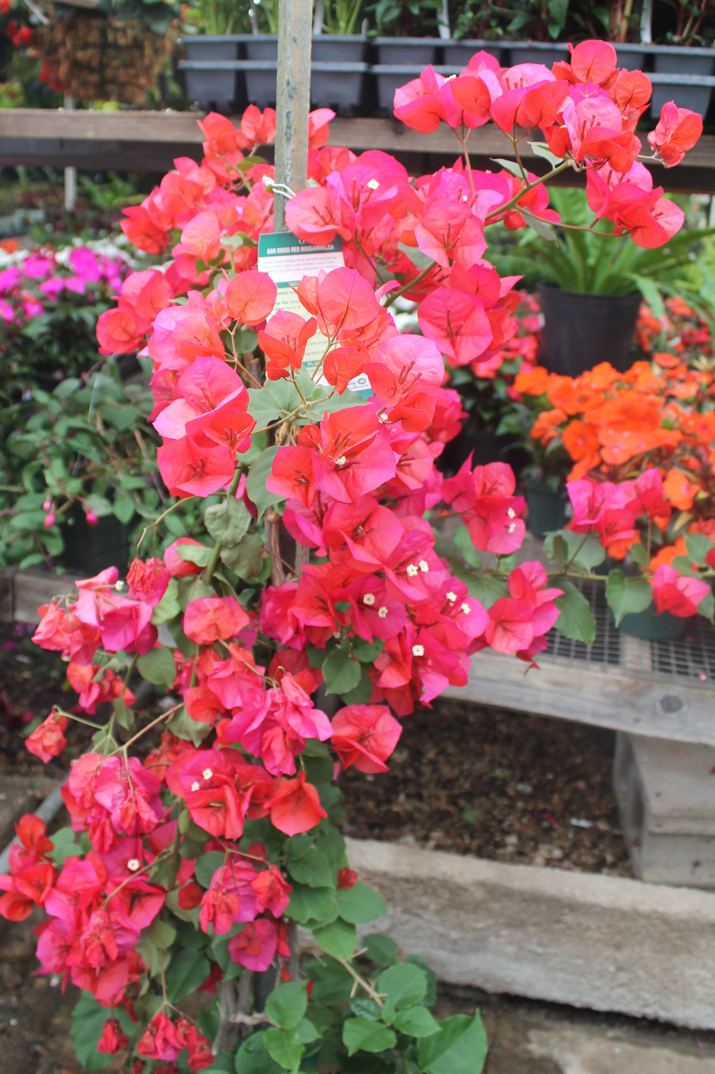 Tropical House Plants Denver on winter potted plants, winter shade plants, winter blooming plants, winter porch plants, winter container plants, winter hibiscus, winter yard plants, winter deck plants, winter perennial plants, winter interest plants, winter flowering plants, winter fragrant plants, winter house landscaping, winter planter plants, winter house art, winter hardy plants, winter outdoor plants, winter house cookies, great winter plants, winter patio plants,