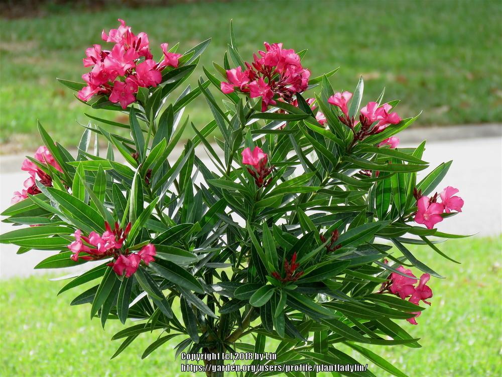 Tropical House Plants Denver