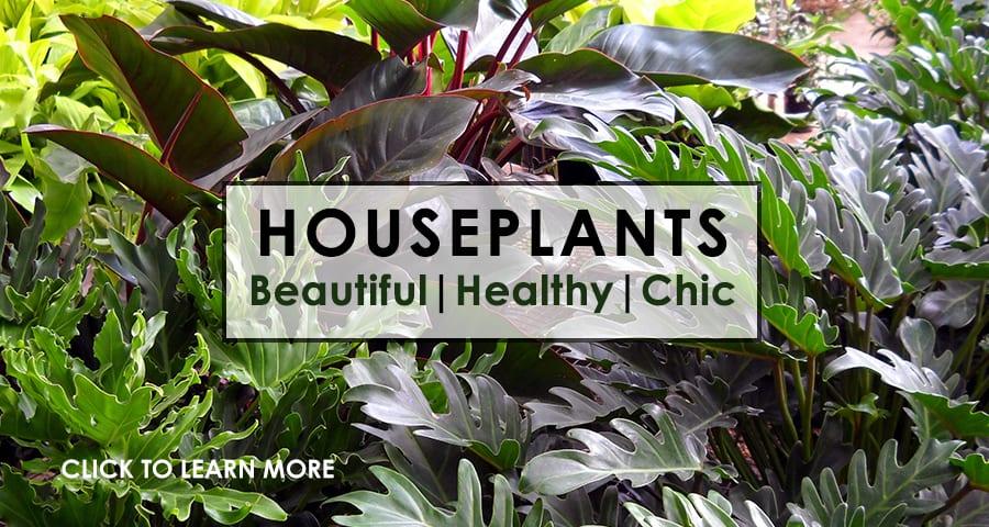 Houseplants FINAL