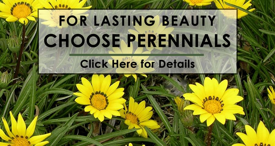 Perennials FINAL