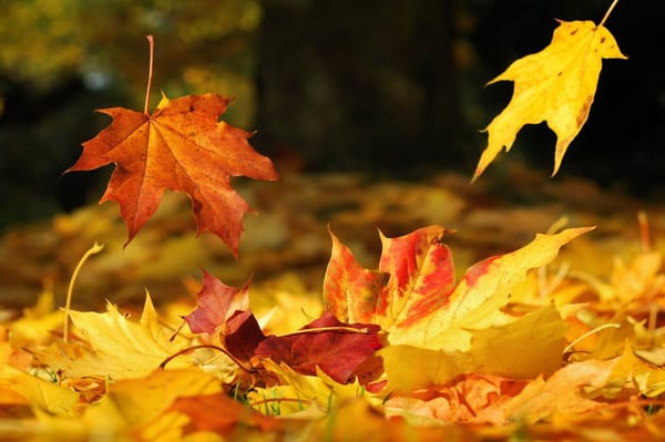 Raking leaves to help winterize