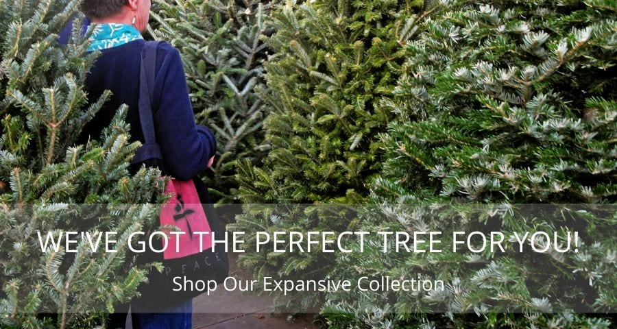 WE'VE GOT THE PERFECT CHRISTMAS TREE FOR YOU!