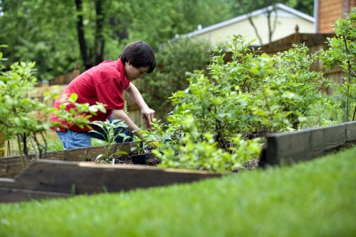 Young Boy Plants Vegetables in his social distance garden