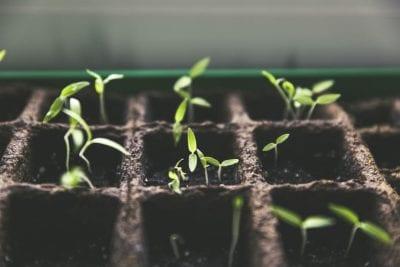 Indoor Seeding