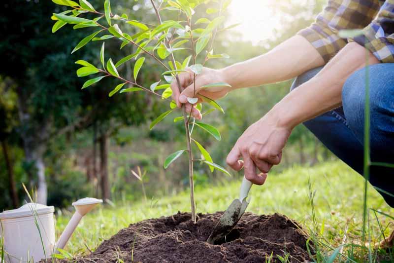 Arbor Day everyday tree planting