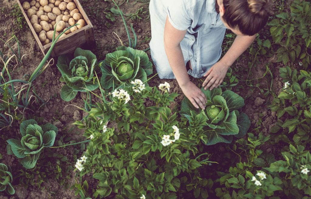 Social distance gardening