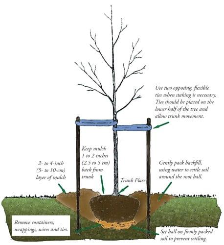 Planting a tree diagram