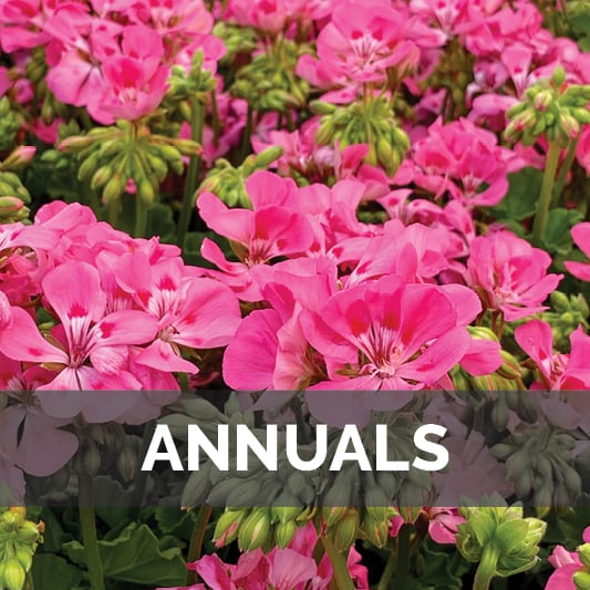 Annuals at City Floral Greenhouse and Garden Center