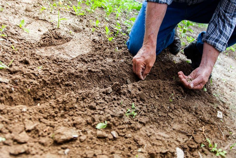 Sowing Vegetable Seeds