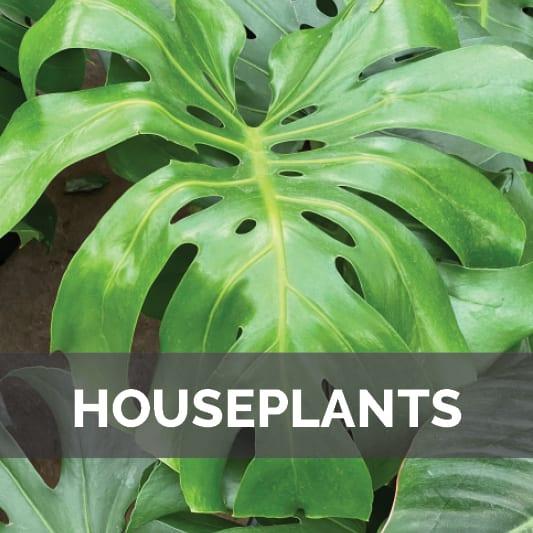 Houseplants at City Floral Garden Center in Denver