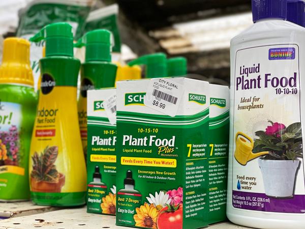Fertilizer for Indoor Houseplants
