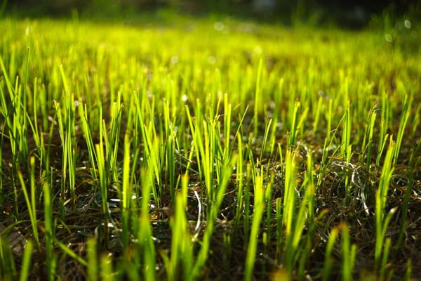Give your lawn some love