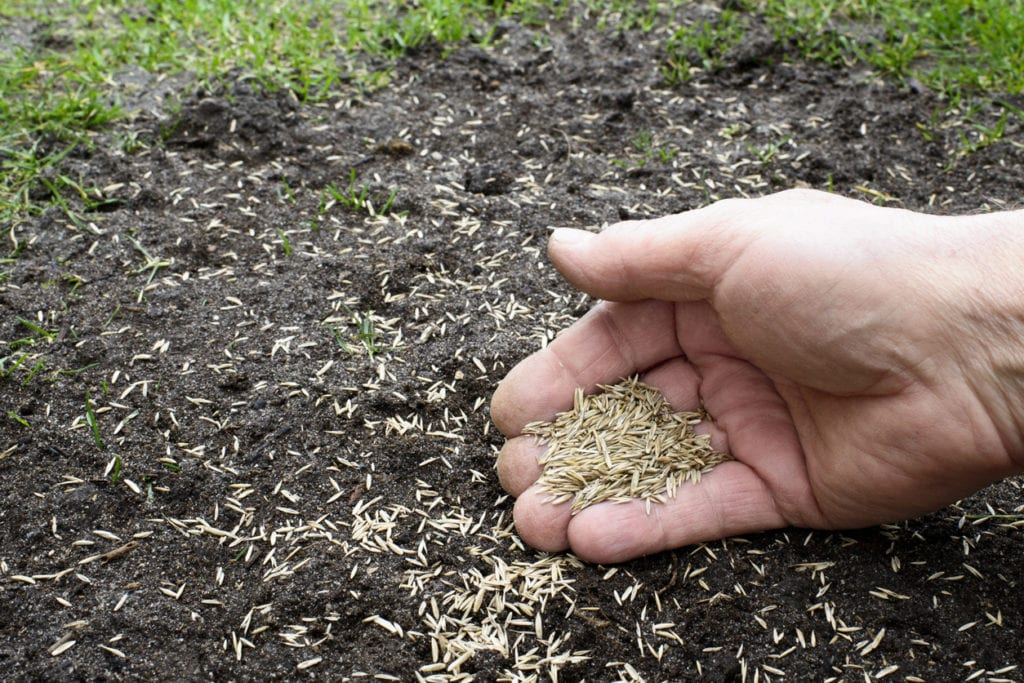 Over-seed for fall lawn care
