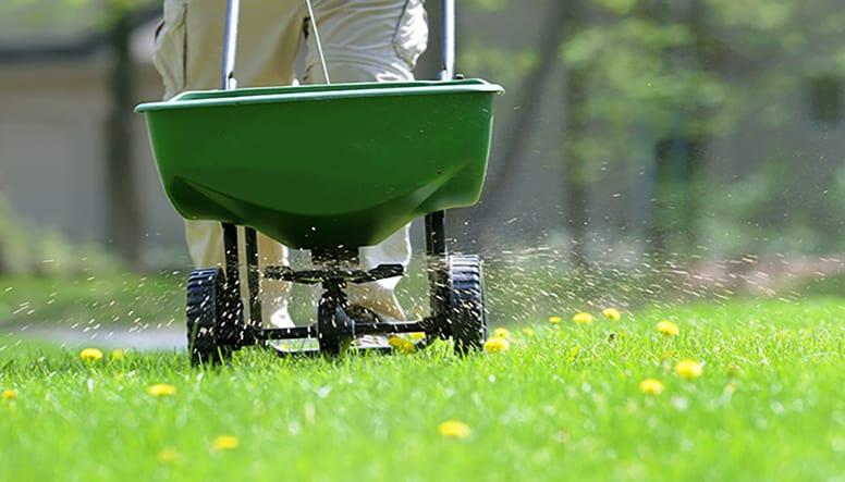 Fertilize you lawn in the fall