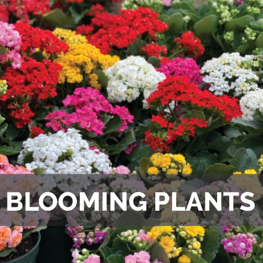 Blooming Plants at City Floral Garden Center in Denver