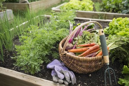 October Gardening to-do's