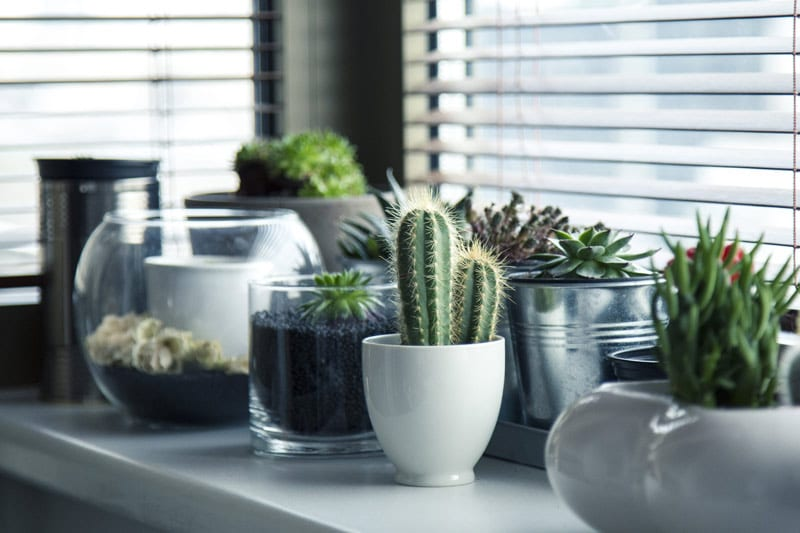 Bringing your houseplants indoors means they have to adjust to the change in light