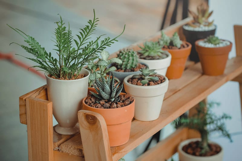 Outdoor houseplants
