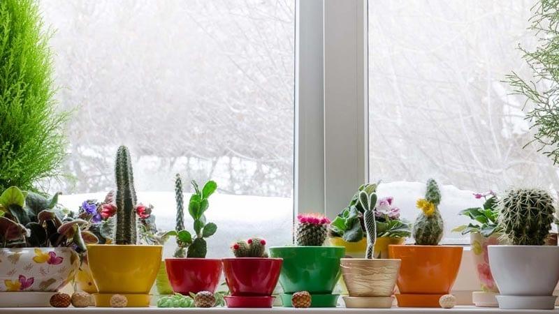Take care of those houseplants
