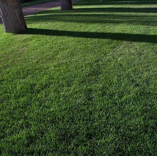 Colorado Grass Seed Mix