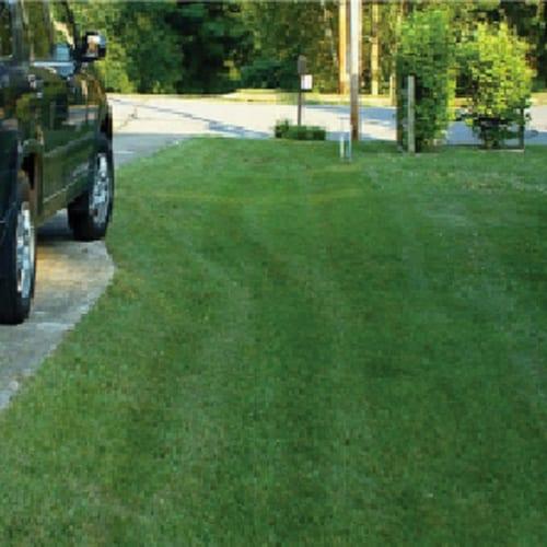 Front Range Premium Bluegrass Seed