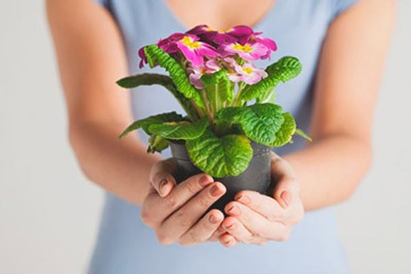 Giving Plants as Gifts