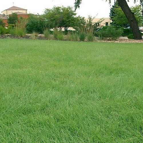 Native Grass Seed Mix