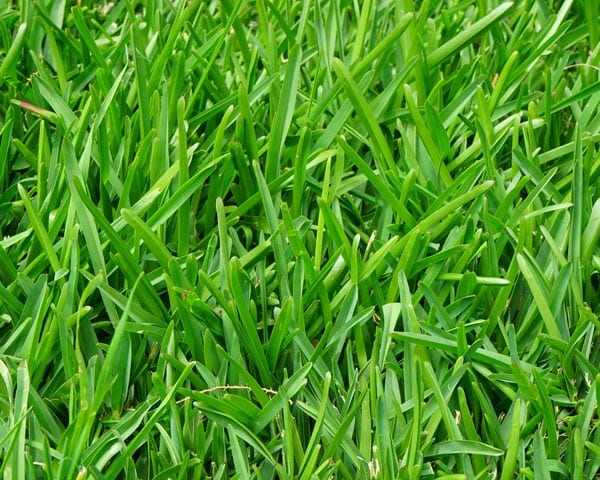 Nice Lawn Grass Seed Mix