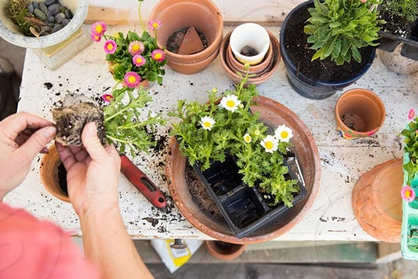 Potting Flowers